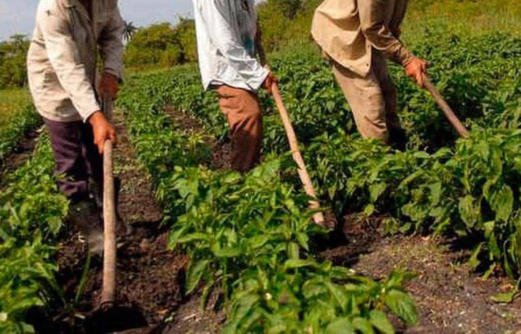 Governo aprova medidas para ajudar agricultores mas veta o auxílio para os que ainda não receberam; entenda o motivo